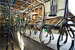 Goats walking beside milking machine Stock Photo - Premium Royalty-Free, Artist: Photocuisine, Code: 695-05767847