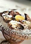 Oysters on ice, close-up Stock Photo - Premium Royalty-Free, Artist: Susan Findlay, Code: 695-05773159