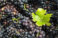 Grape leaf on heap of grapes Stock Photo - Premium Royalty-Freenull, Code: 695-05779715
