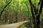 Mahogany forest, Bohol, Philippines, Southeast Asia, Asia Stock Photo - Premium Rights-Managed, Artist: Robert Harding Images, Code: 841-05781108