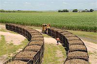 queensland - Machine-cut sugar cane in rail trucks outside mill, Ayr, Queensland, Australia, Pacific Stock Photo - Premium Rights-Managednull, Code: 841-05781225