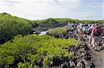 Tourists on a walking tour in the lava fields at the Tintoreras, Isla Isabela, Galapagos Islands, UNESCO World Heritage Site, Ecuador, South America Stock Photo - Premium Rights-Managed, Artist: Robert Harding Images, Code: 841-05782908