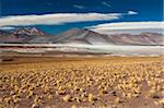 Salar de Talar, Atacama Desert, Chile, South America Stock Photo - Premium Rights-Managed, Artist: Robert Harding Images, Code: 841-05783046