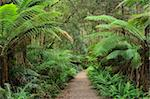 Footpath through Temperate Rainforest, Strahan, Tasmania, Australia, Pacific Stock Photo - Premium Rights-Managed, Artist: Robert Harding Images, Code: 841-05783565