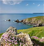 Sea thrift (Armeria maritima) growing on cliffs above Carrick Luz headland, Lizard Peninsula, Cornwall, United Kingdom, Europe Stock Photo - Premium Rights-Managed, Artist: Robert Harding Images, Code: 841-05785094