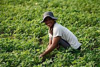 Farmer growing greens, Kampot, Cambodia, Indochina, Southeast Asia, Asia Stock Photo - Premium Rights-Managednull, Code: 841-05786025