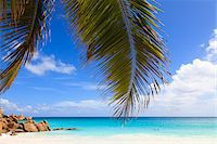 seychelles - Coconut Palm Tree Fronds and Indian Ocean at Anse Georgette, Praslin Island, Seychelles Stock Photo - Premium Royalty-Freenull, Code: 600-05786188