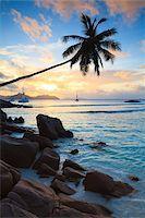 seychelles - Coconut Palm Tree at Sunset, Anse Severe, La Digue, Seychelles Stock Photo - Premium Royalty-Freenull, Code: 600-05786207
