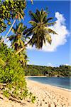 Shoreline of Anse Takamaka, Mahe, Seychelles Stock Photo - Premium Royalty-Free, Artist: F. Lukasseck, Code: 600-05786223