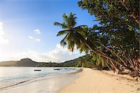 palm - Shoreline, Baie Lazare, Mahe, Seychelles Stock Photo - Premium Royalty-Freenull, Code: 600-05786224