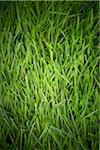 Grass, Bradford, Ontario, Canada Stock Photo - Premium Royalty-Free, Artist: Shannon Ross, Code: 600-05786506