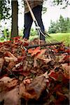 Gardener Raking Maple Leaves, Bradford, Ontario, Canada Stock Photo - Premium Royalty-Free, Artist: Shannon Ross, Code: 600-05786537