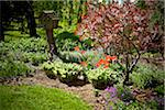 Garden, Bradford, Ontario, Canada Stock Photo - Premium Royalty-Free, Artist: Shannon Ross, Code: 600-05786548