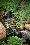 Water Feature in Garden, Bradford, Ontario, Canada Stock Photo - Premium Royalty-Free, Artist: Shannon Ross, Code: 600-05786553