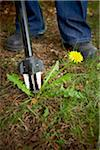 Gardener Weeding Dandelion, Bradford, Ontario, Canada Stock Photo - Premium Royalty-Free, Artist: Shannon Ross, Code: 600-05786560