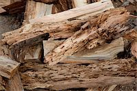 forestry - Close-up view of weathered driftwood Stock Photo - Premium Royalty-Freenull, Code: 693-05794378