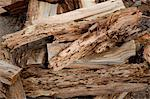 Close-up view of weathered driftwood Stock Photo - Premium Royalty-Free, Artist: Michael Mahovlich, Code: 693-05794378