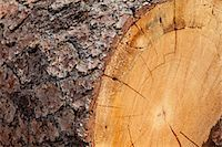 forestry - Close-up of chopped tree stump Stock Photo - Premium Royalty-Freenull, Code: 693-05794379