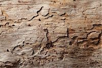 forestry - Close-up shot of wood grain pattern Stock Photo - Premium Royalty-Freenull, Code: 693-05794401