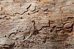 Close-up shot of wood grain pattern Stock Photo - Premium Royalty-Free, Artist: Minden Pictures, Code: 693-05794401