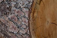 forestry - Extreme close-up view of tree bark Stock Photo - Premium Royalty-Freenull, Code: 693-05794402