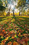 Hyde Park in autumn, London, England, United Kingdom, Europe Stock Photo - Premium Rights-Managed, Artist: Robert Harding Images, Code: 841-05795606