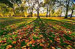 Hyde Park in autumn, London, England, United Kingdom, Europe Stock Photo - Premium Rights-Managed, Artist: Robert Harding Images, Code: 841-05795607