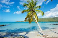 palm - Beach and palm tree near the Club Mediterannee hotel, Le Marin, Martinique, French Overseas Deparrment, Windward Islands, West Indies, Caribbean, Central America Stock Photo - Premium Rights-Managednull, Code: 841-05796481