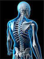 spinal column - Upper body bones, artwork Stock Photo - Premium Royalty-Freenull, Code: 679-05798141