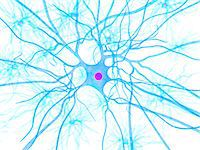Nerve cell, artwork Stock Photo - Premium Royalty-Freenull, Code: 679-05798215