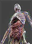 Human anatomy, artwork Stock Photo - Premium Royalty-Free, Artist: Science Faction, Code: 679-05798718