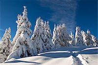 snow covered trees - Alleghe, Belluno Province, Veneto, Dolomites, Italy Stock Photo - Premium Royalty-Freenull, Code: 600-05800576