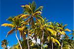 Palm Trees, Antigua, Antigua and Barbuda Stock Photo - Premium Rights-Managed, Artist: Alberto Biscaro, Code: 700-05800564