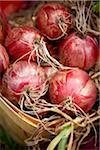 Close-up of Harvested Red Onions, Toronto, Ontario, Canada Stock Photo - Premium Royalty-Free, Artist: Shannon Ross, Code: 600-05800654