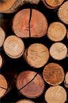 Close up of stacked logs Stock Photo - Premium Royalty-Free, Artist: ableimages, Code: 649-05801715