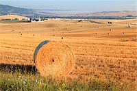 Hay Bales in Field, Val d'Orcia, Tuscany, Italy Stock Photo - Premium Rights-Managednull, Code: 700-05803071