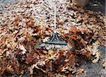 Autumn Leaves, Rake and Yard Waste Bag Stock Photo - Premium Royalty-Free, Artist: Andrew Kolb, Code: 600-05803161