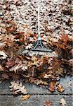 Autumn Leaves and Rake Stock Photo - Premium Royalty-Free, Artist: Andrew Kolb, Code: 600-05803162