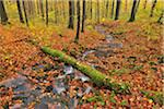 Stream in Autumn Forest, Rhon Mountains, Hesse, Germany Stock Photo - Premium Royalty-Free, Artist: Raimund Linke, Code: 600-05803181