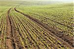 Sowed Field in Early Spring, Franconia, Bavaria, Germany Stock Photo - Premium Royalty-Free, Artist: Raimund Linke, Code: 600-05803193
