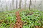 Path through Misty Forest in Early Spring, Triefenstein, Franconia, Bavaria, Germany Stock Photo - Premium Royalty-Free, Artist: Raimund Linke, Code: 600-05803203