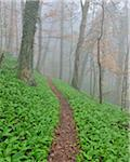 Path through Misty Forest in Early Spring, Triefenstein, Franconia, Bavaria, Germany Stock Photo - Premium Royalty-Free, Artist: Raimund Linke, Code: 600-05803205