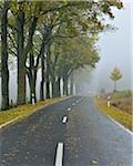 Tree-Lined Country Road in Autumn, Rhon Mountains, Hesse, Germany Stock Photo - Premium Rights-Managed, Artist: Raimund Linke, Code: 700-05803212
