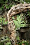 Tree Root and Ta Prohm Temple, Angkor, Siem Reap, Cambodia Stock Photo - Premium Rights-Managed, Artist: dk & dennie cody, Code: 700-05803485
