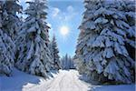 Snow Covered Winter Landscape with Ski Trail, Rennsteig, Grosser Beerberg, Thuringia, Germany Stock Photo - Premium Royalty-Free, Artist: Raimund Linke, Code: 600-05803709