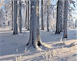 Snow Covered Forest, Grosser Inselsberg, Brotterode, Thuringia, Germany Stock Photo - Premium Royalty-Free, Artist: Raimund Linke, Code: 600-05803713