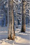 Snow Covered Forest, Grosser Inselsberg, Brotterode, Thuringia, Germany Stock Photo - Premium Royalty-Free, Artist: Raimund Linke, Code: 600-05803714