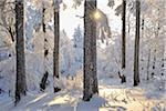Snow Covered Forest with Sun, Grosser Inselsberg, Brotterode, Thuringia, Germany Stock Photo - Premium Royalty-Free, Artist: Raimund Linke, Code: 600-05803715
