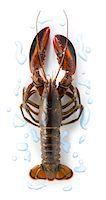 Raw lobster Stock Photo - Premium Royalty-Freenull, Code: 652-05806992