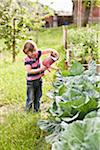 Child watering the vegetables in the vegetable garden Stock Photo - Premium Royalty-Freenull, Code: 652-05808587